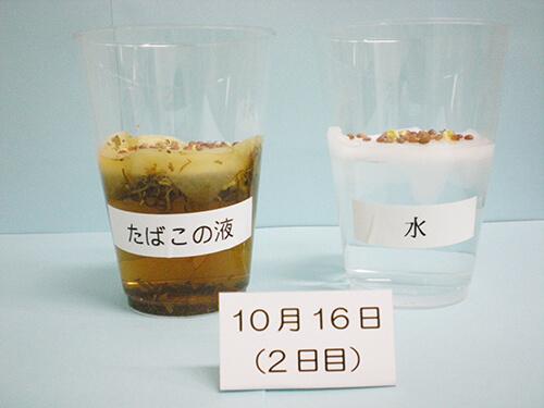 カイワレ大根による発芽実験⑦