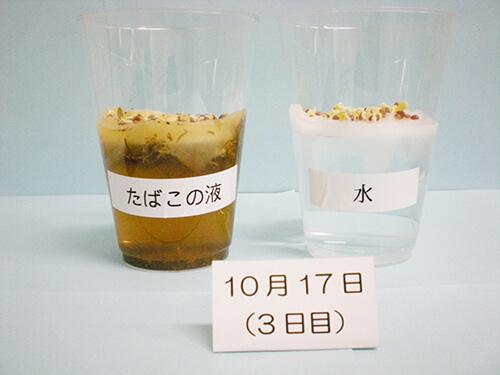 カイワレ大根による発芽実験⑨